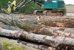 Drzewa które powalać rozjaśniać ziemię dla nowego postępu i cięli w bele Fotografia Stock