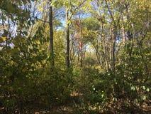 Drzewa, las Obrazy Stock