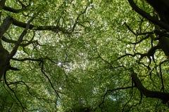 Drzewa lasowy przyglądający w górę baldachimu słońca glinting w obraz stock
