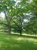 Drzewa lato Zdjęcia Royalty Free