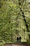 drzewa leśne Zdjęcie Royalty Free