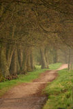 drzewa leśne Obraz Stock
