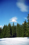 drzewa leśne Fotografia Royalty Free