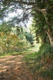 Drzewa, liścia i natury tło Zdjęcie Stock