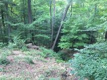 Drzewa, liście, trawa i krzaki, Zdjęcie Stock