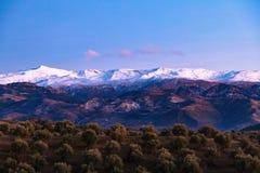 Drzewa lub ogród na tle sierra Nevada góra w Hiszpania obraz royalty free