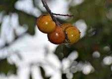 Drzewa makro- zdjęcie stock