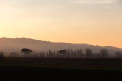 Drzewa, mgła i zmierzch, Obrazy Stock