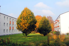 Drzewa między domami Zdjęcie Royalty Free