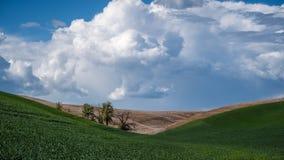 Drzewa między wzgórzami w Palouse 2 Zdjęcia Stock