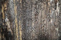Drzewa mogą mówić Obrazy Royalty Free