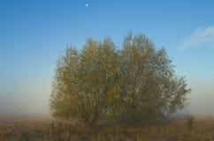 Drzewa na łące Fotografia Royalty Free