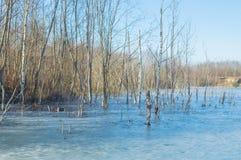 Drzewa na brzeg marznęli w lód Zdjęcia Royalty Free