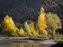 Drzewa na brzeg rzeki kręcenia kolorze żółtym w jesieni Obrazy Royalty Free
