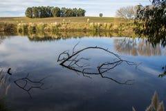 Drzewa na brzeg rzekim quequen grande zdjęcia stock