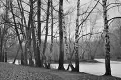 Drzewa na brzeg staw Zdjęcia Stock