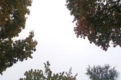 Drzewa na deszczowym dniu Zdjęcia Royalty Free