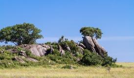 Drzewa na falezach i skały w Serengeti Tanzania, Afryka Obraz Royalty Free