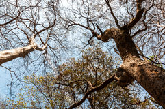 Drzewa na górach Obraz Stock