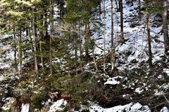 Drzewa na górze Obrazy Stock