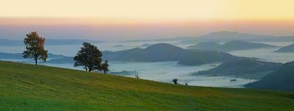 Drzewa na horyzoncie przed wschód słońca Zdjęcia Royalty Free