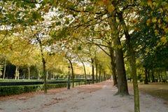 Drzewa na jesieni Zdjęcie Royalty Free
