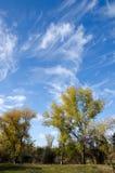 Drzewa na jeziornym brzeg Fotografia Stock