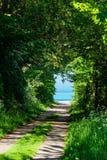 Drzewa na morzu bałtyckim suną w Ahrenshoop, Niemcy Obraz Stock