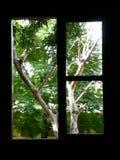 Drzewa na okno Zdjęcia Royalty Free