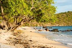 Drzewa na plaży Obraz Royalty Free