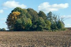 Drzewa na polu Zdjęcia Stock