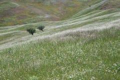 Drzewa na polu Obraz Royalty Free