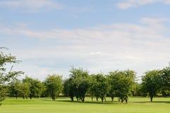 """Drzewa na polu golfowym; KamieÅ """"ÅšlÄ… narta Ordynarny Stein - wioska w administracyjnym okręgu Gmina Gogolin, obraz stock"""
