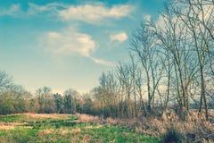 Drzewa na polu z niebieskim niebem Obraz Stock