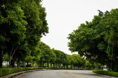 Drzewa na przejściu Obraz Royalty Free