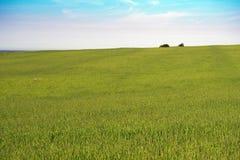 Drzewa na ridgeline gospodarstwo rolne na PEI zdjęcia stock