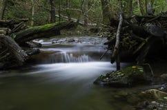 Drzewa na rzece, Daruvar, Chorwacja Obraz Royalty Free