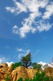 Drzewa na skałach Obraz Royalty Free