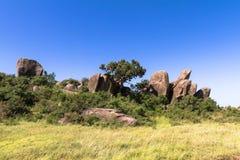 Drzewa na skałach w Serengeti Tanzania, Afryka Fotografia Stock