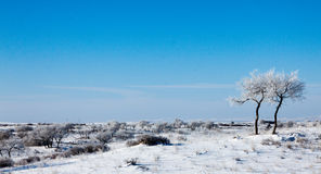 Drzewa na snowfield Zdjęcia Royalty Free