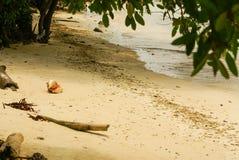 Drzewa na tropikalnej plaży w Colombia, Ameryka Sura Obraz Stock