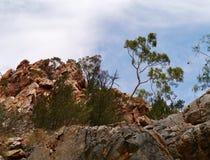 Drzewa na wierzchołku Stanley otchłań fotografia royalty free