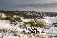 Drzewa na wiosen wzgórzach zakrywających z śniegiem III fotografia royalty free