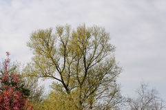 Drzewa na wiosna dniu Fotografia Royalty Free