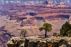 Drzewa na wychodzie Uroczystego jaru ` s południe obręcz Czerwona formacja północy ściana w tle Fotografia Stock