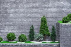 Drzewa na wysokiej ścianie z cegieł fotografia royalty free