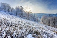 Drzewa na wzgórzach przy zimą Fotografia Royalty Free