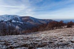 Drzewa na wzgórzach przy zimą Zdjęcia Stock