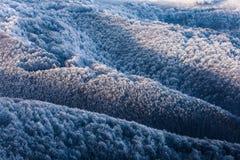 Drzewa na wzgórzach przy zimą Zdjęcie Royalty Free