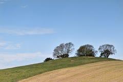 Drzewa na wzgórzu Zdjęcie Stock